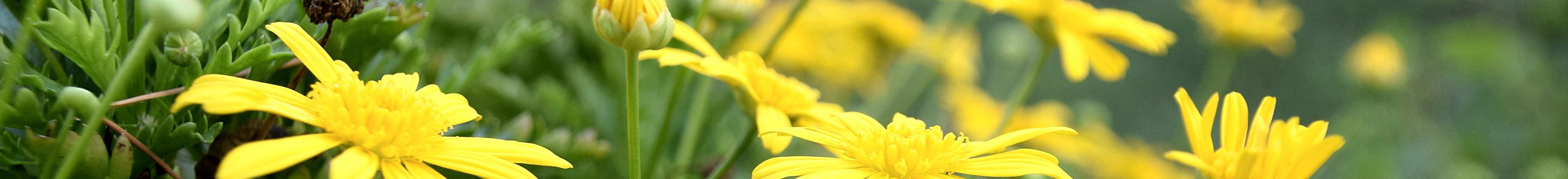 6_fleurs